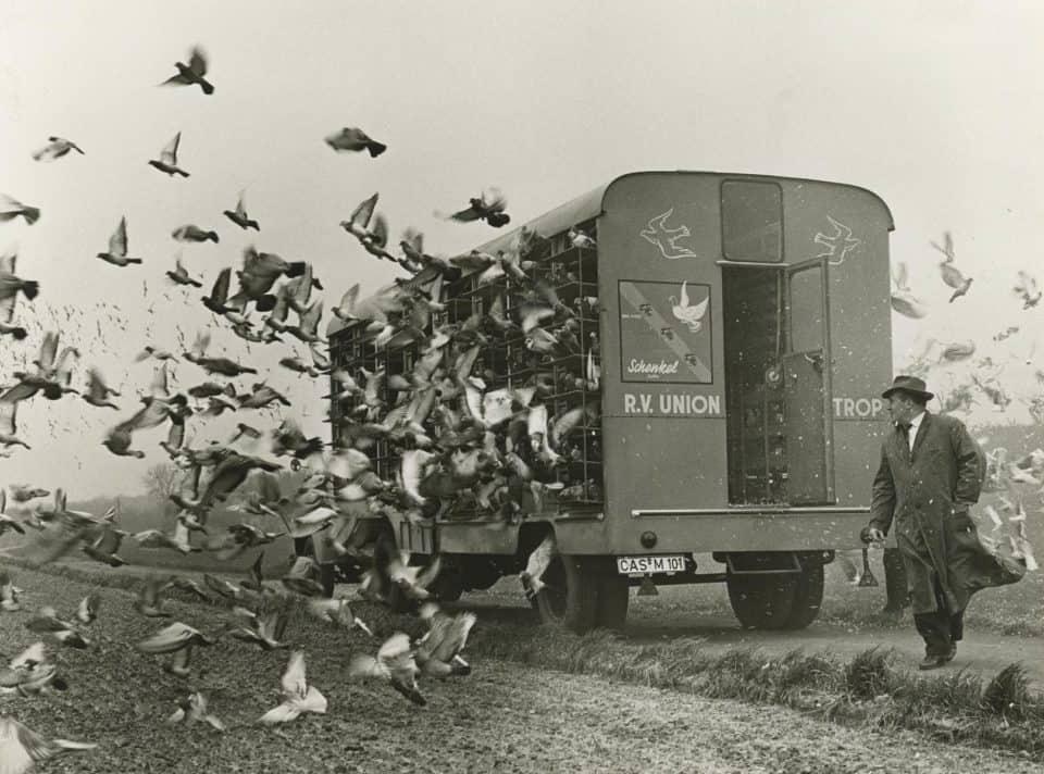 Taubenauflass der Reisevereinigung Union Castrop, 1970er Jahre. Foto: Helmut Orwat © LWL-Medienzentrum für Westfalen